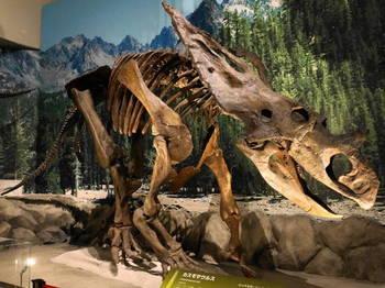 カスモサウルス.JPG
